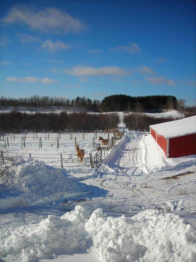Paddocks and west pasture in winter